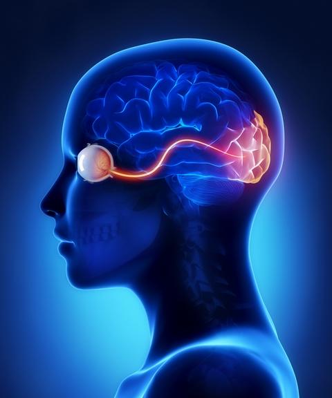 Put optickog nerva
